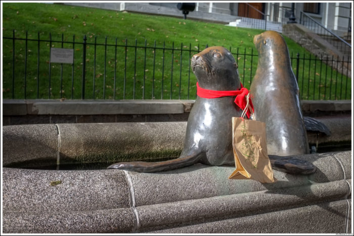 Downtown Seals